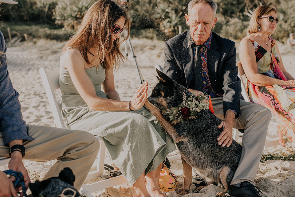 Dreamtime Beach Wedding Dog - Hitched iN Paradise Elopement